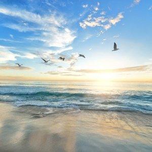 Gulls Flying Together